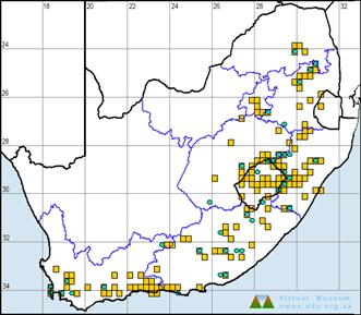 LepiMap Distribtion Map of Table Mountain Beauty