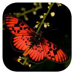 Butterflies app logo